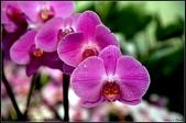 溪海花卉:DSC_0376