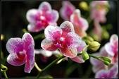 溪海花卉:DSC_0369