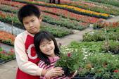 溪海花卉:DSC_3092
