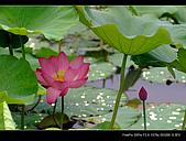 2008新屋蓮園:DSCF2999.jpg