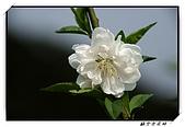 貓空杏花林:DSCF1058.jpg