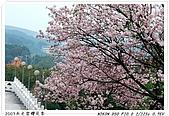 春櫻滿開天元宮:DSC_4149