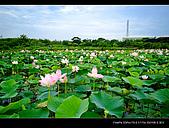 2008新屋蓮園:DSCF3099.jpg
