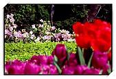 十八尖山賞花月:DSC_3223