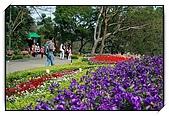 十八尖山賞花月:DSC_3225