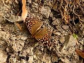 德芙蘭生態步道:20080113_7070.jpg