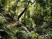 德芙蘭生態步道:20080113_7073.jpg