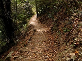 德芙蘭生態步道:20080113_7080.jpg