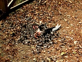 德芙蘭生態步道:20080113_7088.jpg