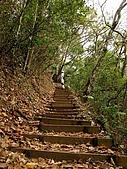 德芙蘭生態步道:20080113_7096.jpg