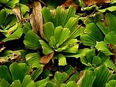 德芙蘭生態步道:20080113_7105.jpg