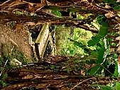 德芙蘭生態步道:20080113_7108.jpg