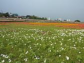 20101204銅鑼杭菊+客家大院:P1030921.JPG