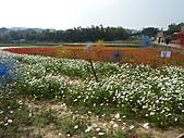 20101204銅鑼杭菊+客家大院:P1030913.JPG