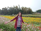 20101204銅鑼杭菊+客家大院:P1030927.JPG