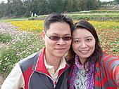 20101204銅鑼杭菊+客家大院:P1030933.JPG