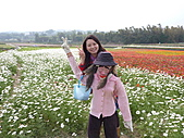 20101204銅鑼杭菊+客家大院:P1030918.JPG