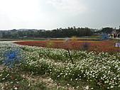 20101204銅鑼杭菊+客家大院:P1030914.JPG