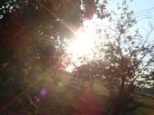 大樹新視界:1963554110.jpg