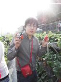 103年1月11日採草莓:SDC13756.JPG