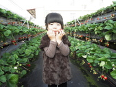 103年1月11日採草莓:SDC13766.JPG