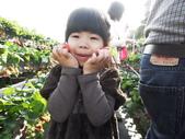 103年1月11日採草莓:SDC13755.JPG