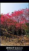2011-2-7 桃源仙谷 大溪老街:DSC_0105.jpg