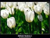 2011-2-7 桃源仙谷 大溪老街:DSC_0123.jpg