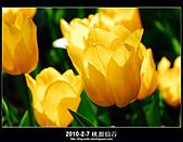 2011-2-7 桃源仙谷 大溪老街:DSC_0142.jpg