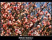 2011-2-7 桃源仙谷 大溪老街:DSC_0146.jpg