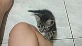 巧虎:2012-06-30新寵兒