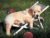 雜〃綜合照片,,(增) : 狗狗