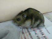 雜〃綜合照片,,(增) : 小老鼠