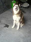 可可低調〞壽:綠綠的狗