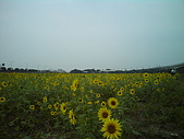 09〞二人:09-11-25_橋頭花海 (9).