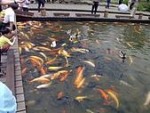 2008-05-01宜蘭羅東公園:IMG_0011.JPG