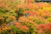20151118_京都賞楓行_第三天-東福寺:DSC_5940.JPG