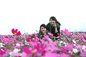 新社花海季-20091122:新社花海季-20091122-030 (Large).jpg