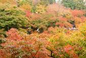 20151118_京都賞楓行_第三天-東福寺:DSC_5877.JPG