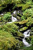 拉拉山巨木群森林浴-20091108:_DSC0227.JPG