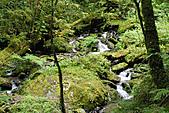 拉拉山巨木群森林浴-20091108:_DSC0225.JPG