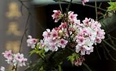 天元宮-20120318:天元宮-20120318-012 (Custom).JPG