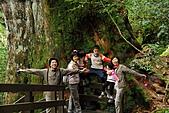 拉拉山巨木群森林浴-20091108:_DSC0270 (Large).JPG