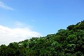 油桐花盛開-小粗坑古道-20080509:油桐花-小粗坑古道-20080509-001 (Large).jpg