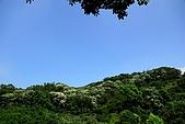 油桐花盛開-小粗坑古道-20080509:油桐花-小粗坑古道-20080509-002 (Large).jpg