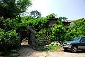 油桐花盛開-小粗坑古道-20080509:油桐花-小粗坑古道-20080509-007 (Large).jpg