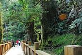 拉拉山巨木群森林浴-20091108:_DSC0112 (Large).JPG
