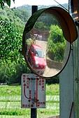 油桐花盛開-小粗坑古道-20080509:油桐花-小粗坑古道-20080509-008 (Large).jpg