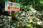 油桐花盛開-小粗坑古道-20080509:油桐花-小粗坑古道-20080509-059 (Large).jpg