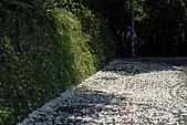 桐花公園-20110510:_DSC0001.JPG